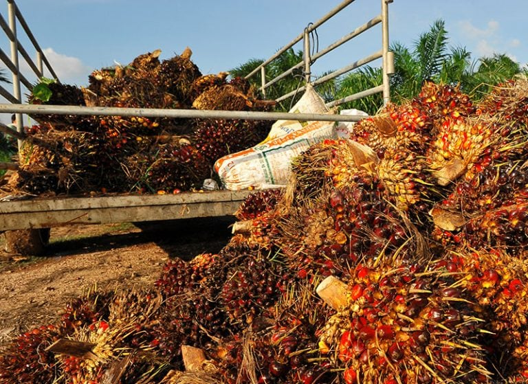 CSVN and P&G Collaboration Extends to Small Growers for Oil Palm Sustainability Initiative